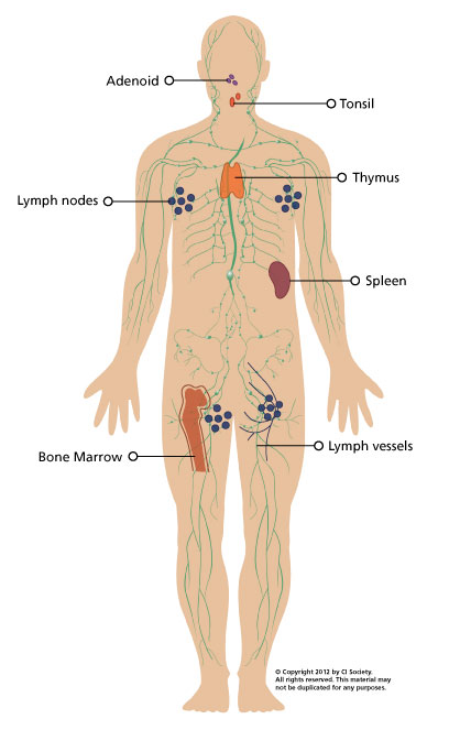 immune system diagram \u2013 immunodeficiency canada Diagram of Integumentary Immune System immune system diagram